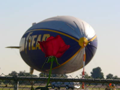 Photograph - Goodyear Blimp With Red Rose by Jeff Lowe