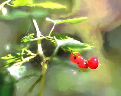 Photograph - Goosberry Imp by Leif Sohlman