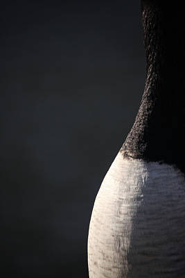 Photograph - Goose Abstract by Karol Livote