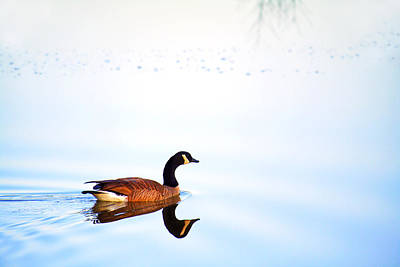 Photograph - Goose Among The Reflections by Jason Politte