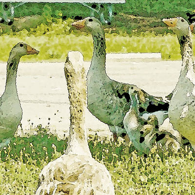 Photograph - Goose Chat by Artist and Photographer Laura Wrede