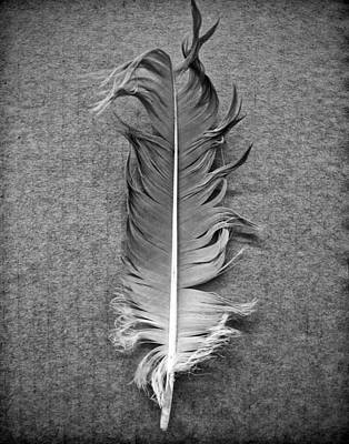 Photograph - Goose Feather Black And White Photograph by Keith Dotson