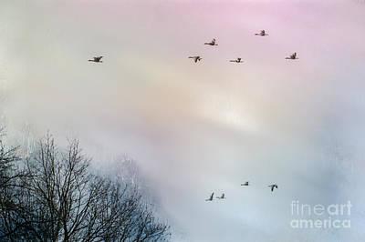 Goose Flight Print by Hannes Cmarits