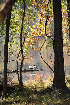 Radnor Lake Photograph - Goose Goose Turtles by Sandy Mullins