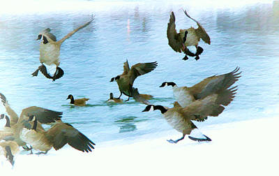 Photograph - Goose Hop by Kathy Bassett