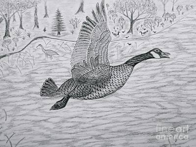 Drawing - Goose In Flight Detail From Canadian Greetings by Gerald Strine