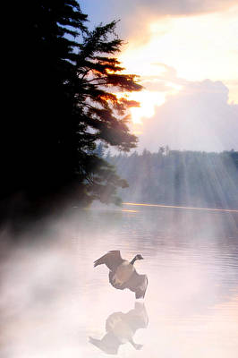 Photograph - Goose Landing by Emily Stauring
