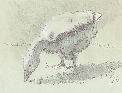 Drawing - Goose by Mike Jory