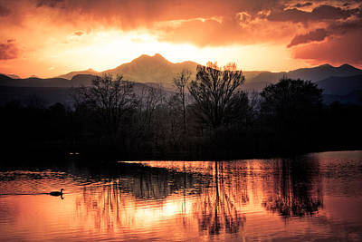 Boulder County Photograph - Goose On Golden Ponds 1 by James BO  Insogna