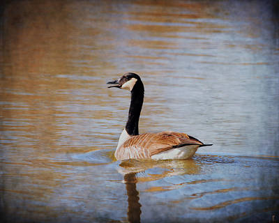 Goose On The Water Print by Jai Johnson
