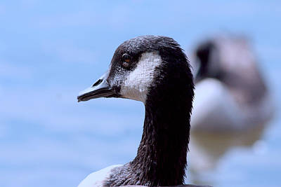 Photograph - Goose Portrait by Lesa Fine