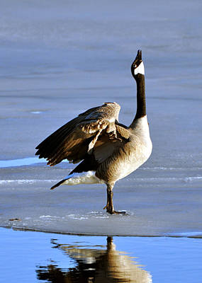 Photograph - Goose Prayer by RJ Martens