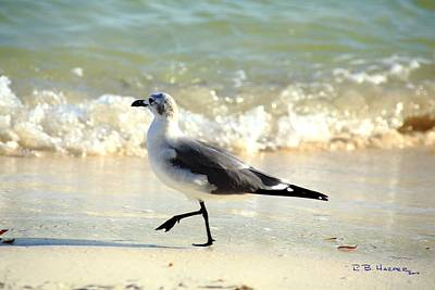Photograph - Goose Stepping by R B Harper