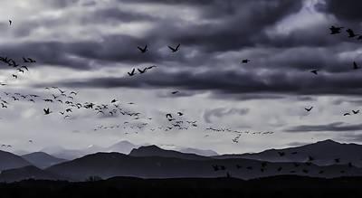 Photograph - Goose - Swarm-mtnp1 by Rae Ann  M Garrett