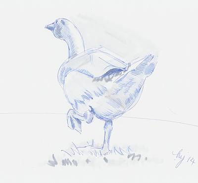 Drawing - Goose Walking by Mike Jory