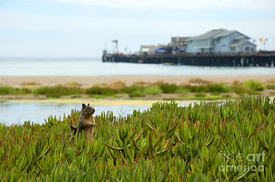 Photograph - Gopher On The Beach by Brenda Kean