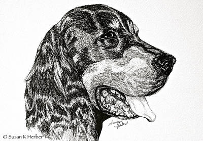 Drawing - Gordon Setter by Susan Herber