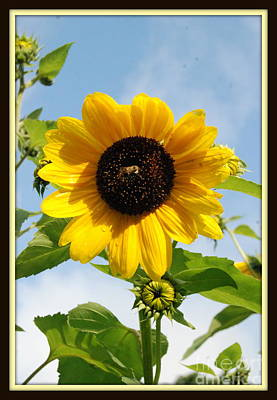 Photograph - Gorgeous Garden Sunflower With Bee by Eunice Miller
