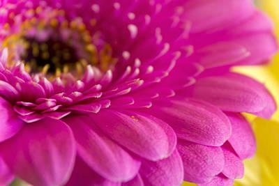 Gorgeous Pink Flower Art Print
