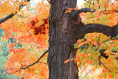 Photograph - Gorgeous Tree by Lorena Mahoney