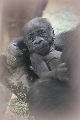 Photograph - Gorilla Baby by Diane Alexander