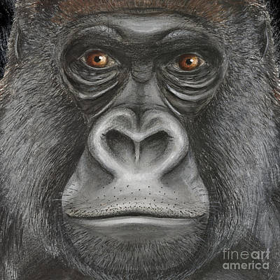 Chimpanzee Painting - Western Lowland Gorilla Face - Fine Art Print - Stock Illustration - Stock Image  by Urft Valley Art