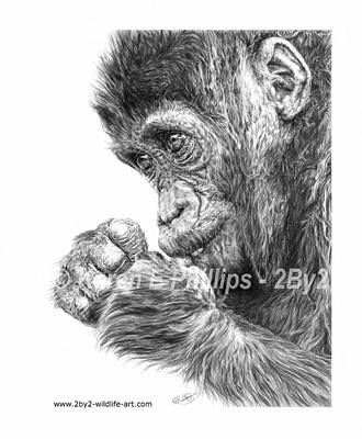Drawing - Gorilla Infant by Karen E Phillips