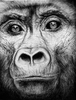 Chimpanzee Mixed Media - Last Portraits by Lauren Crawshaw