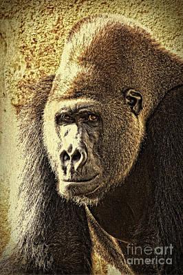 Mammals Photograph - Gorilla Portrait 2 by Heiko Koehrer-Wagner