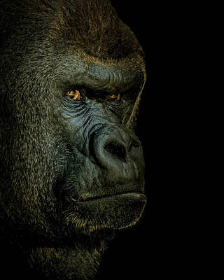 Photograph - Gorilla Portrait by Ernie Echols