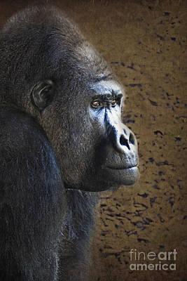 Zoologic Photograph - Gorilla Portrait by Heiko Koehrer-Wagner