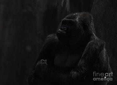 Photograph - Gorilla Thinking by Ronald Grogan