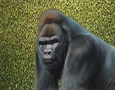 Ape Wall Art - Painting - Gorilla With A Hedge by James W Johnson