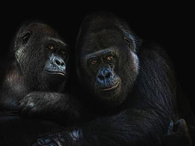 Monkey Photograph - Gorillas In Love by Joachim G Pinkawa