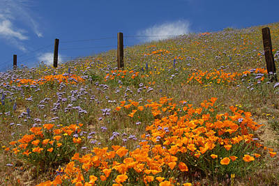 California Photograph - Gorman Wildflowers by Lynn Bauer