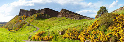 Gorse Bushes Growing On Arthurs Seat Print by Panoramic Images