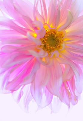 Photograph - Gossamer Glow by Mary Jo Allen