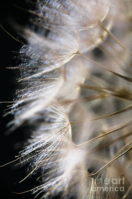 Photograph - Gossamer by Jan Bickerton