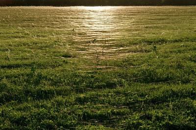 Spiderweb Photograph - Gossamer Spider Webs In A Field by Dr. John Brackenbury/science Photo Library