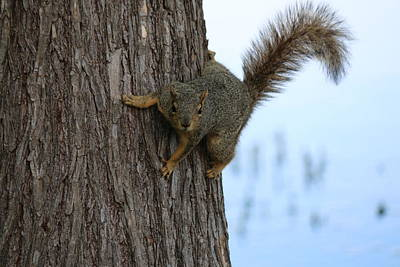 Photograph - Lookin' For Nuts by Christy Pooschke