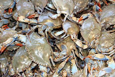 Photograph - Blue Claw Crabs by Bob Slitzan