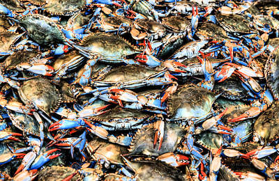 Photograph - Got Crabs by JC Findley