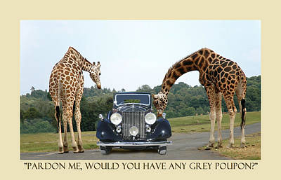 Photograph - Got Grey Poupon by Jack Pumphrey