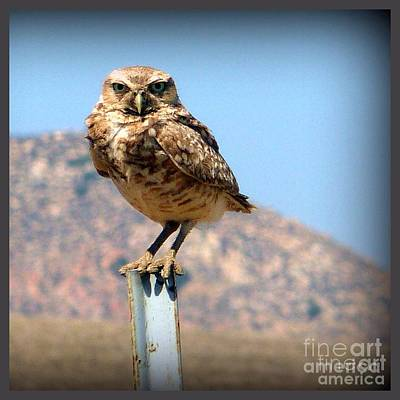 Photograph - Got My Eyes On You Owl by Susan Garren