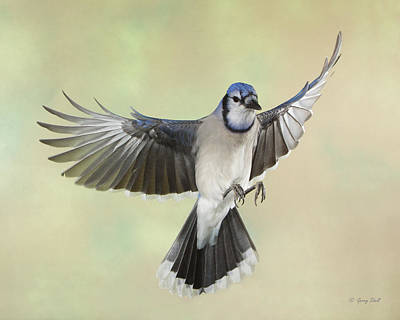 Photograph - Got Seeds by Gerry Sibell