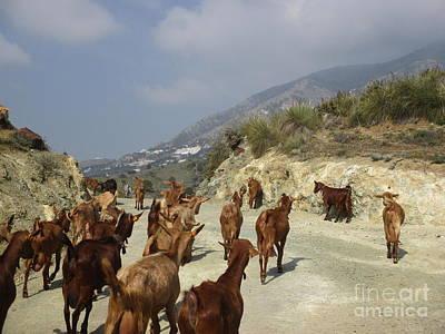 Photograph - Goats Near Mijas by Chani Demuijlder