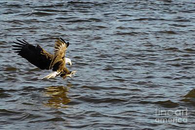 Birds Of Prey Photograph - Gotch Ya  by Robert Smice