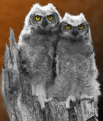 Owl Photograph - Gothic Ally And Olly On Halloween by Barbara McMahon