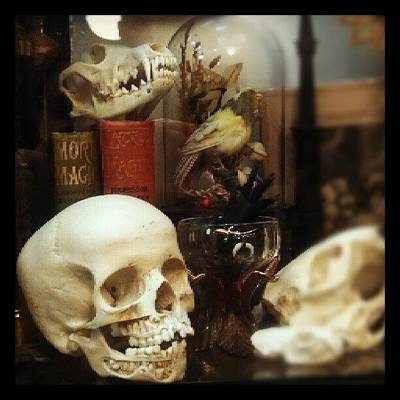Steampunk Photograph - Gothic Curio by Rachel Waters