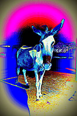 Belong Dead Photograph - Say Hello To The Gothic Donkey by Hilde Widerberg